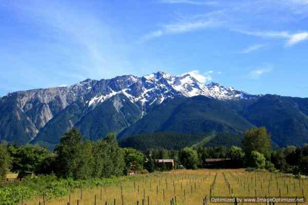 Pemberton Vineyard