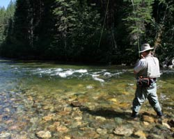 Fly fisher with trout on line while fishing the Birkenhead River