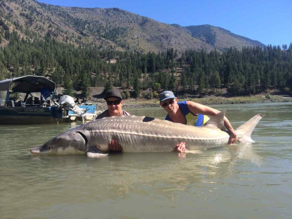 Best freshwater fishing in canada right here in pemberton bc for Fishing trips in canada