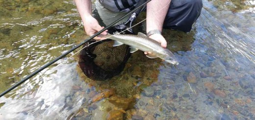 Fly fishing for Bull Trout in Pemberton BC