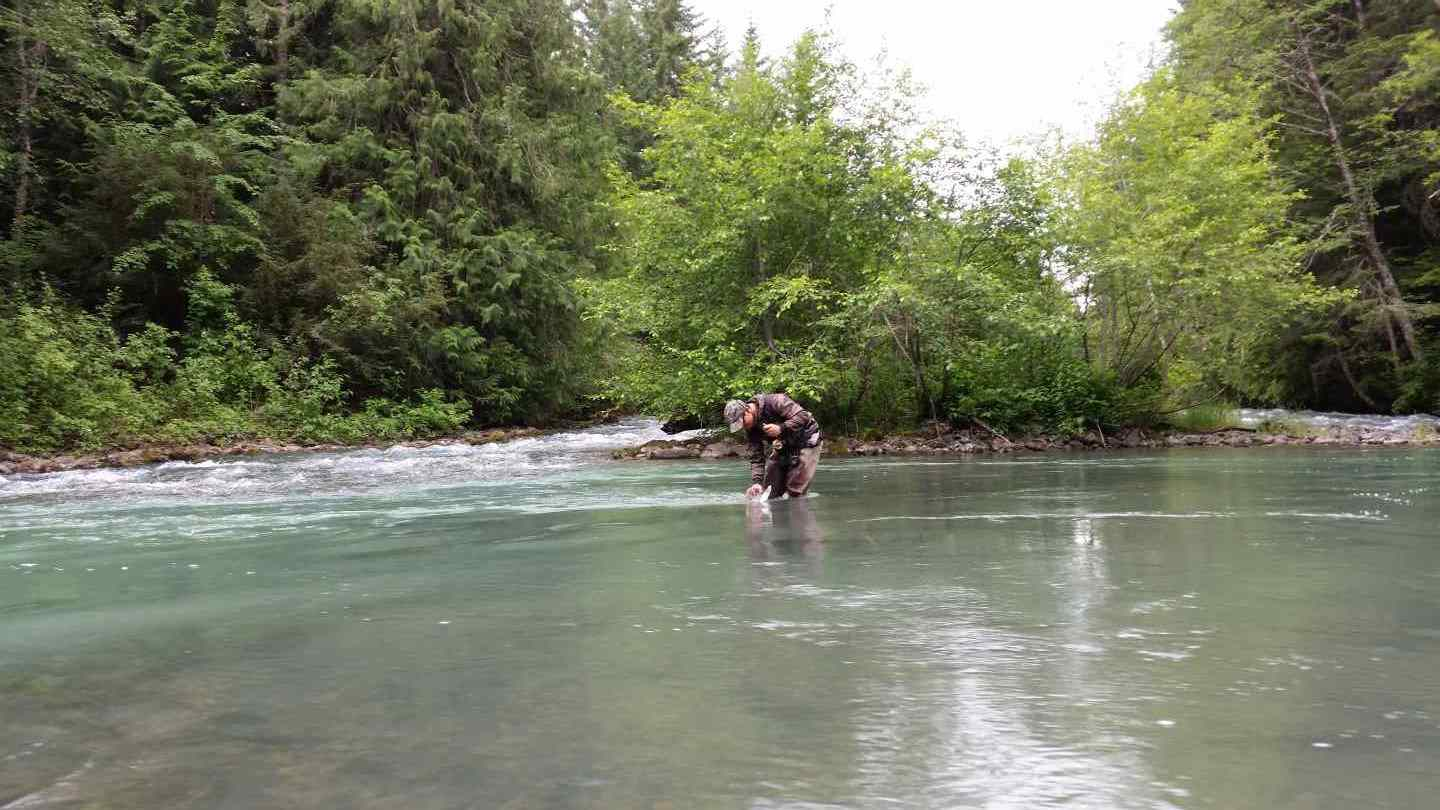 Fly fishing tours in the whistler british columbia area for Green river fly fishing report