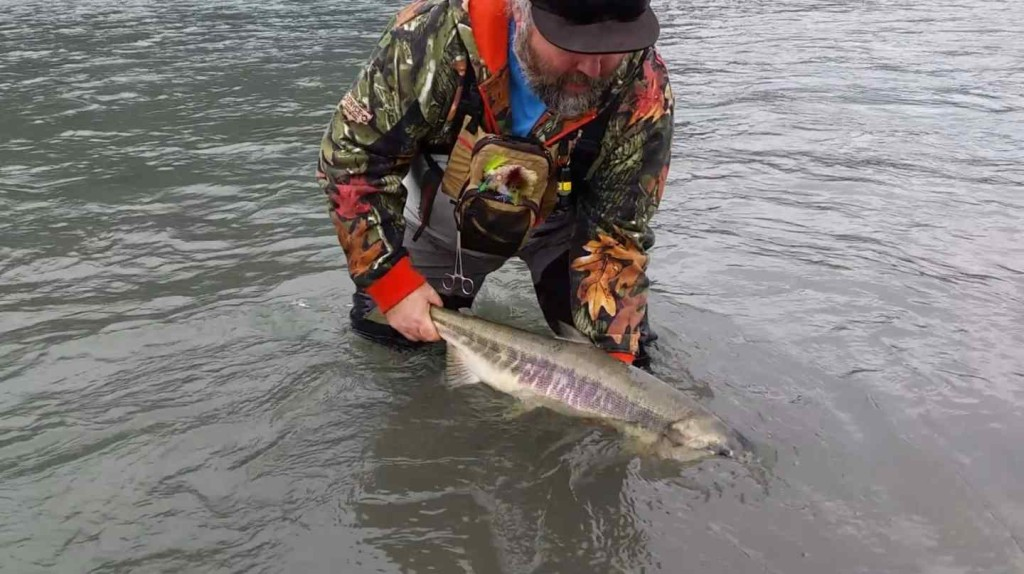Coho salmon and chum salmon fly fishing in squamish bc canada for Salmon fishing canada