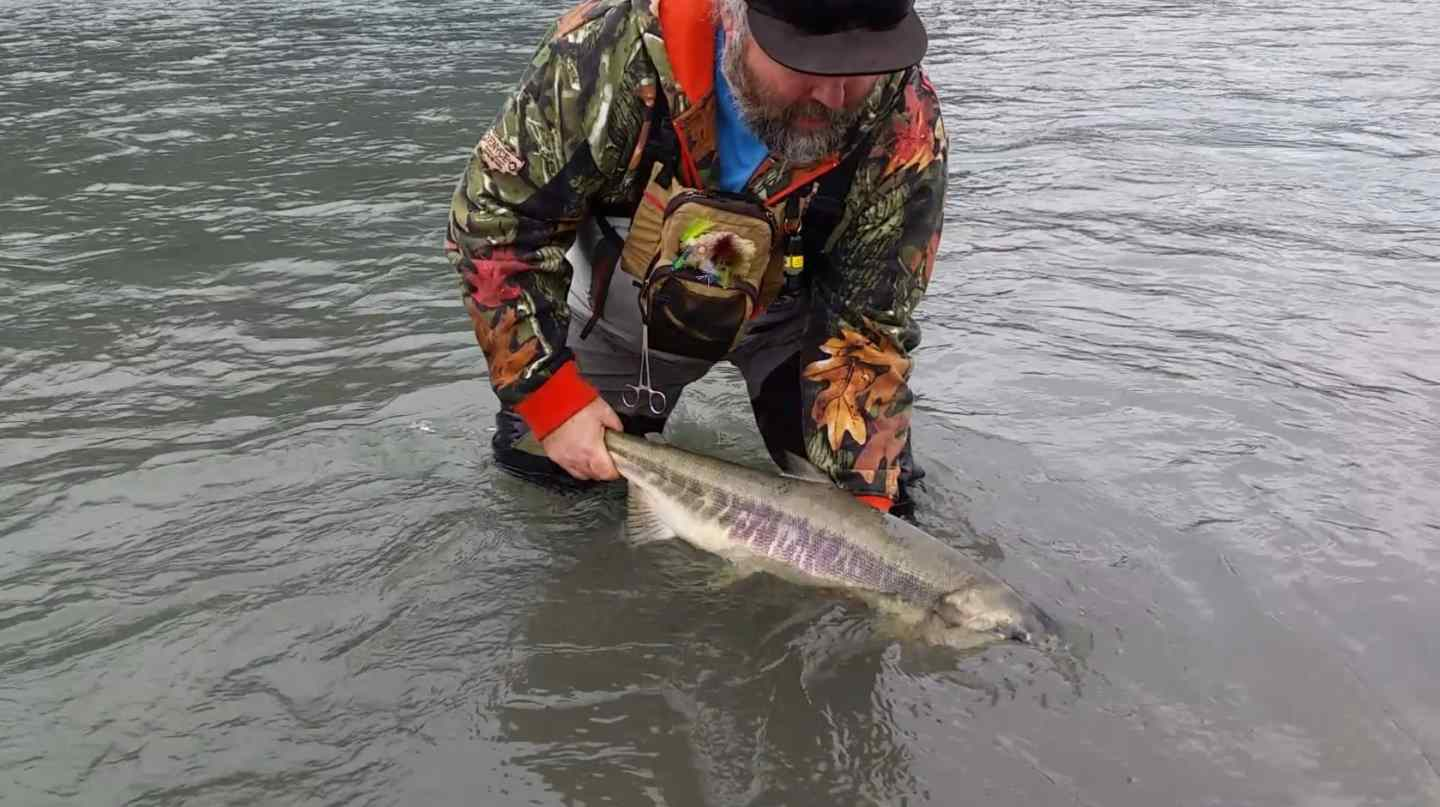 Coho salmon and chum salmon fly fishing in squamish bc canada for Fly in fishing canada