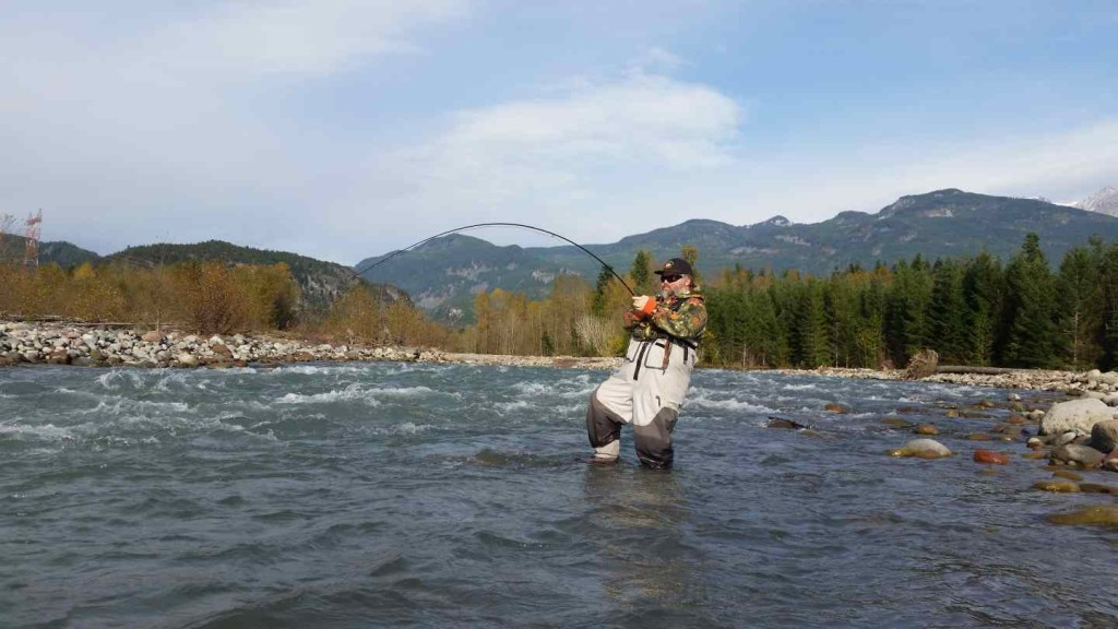 Fly fishing Chum Salmon in Canada