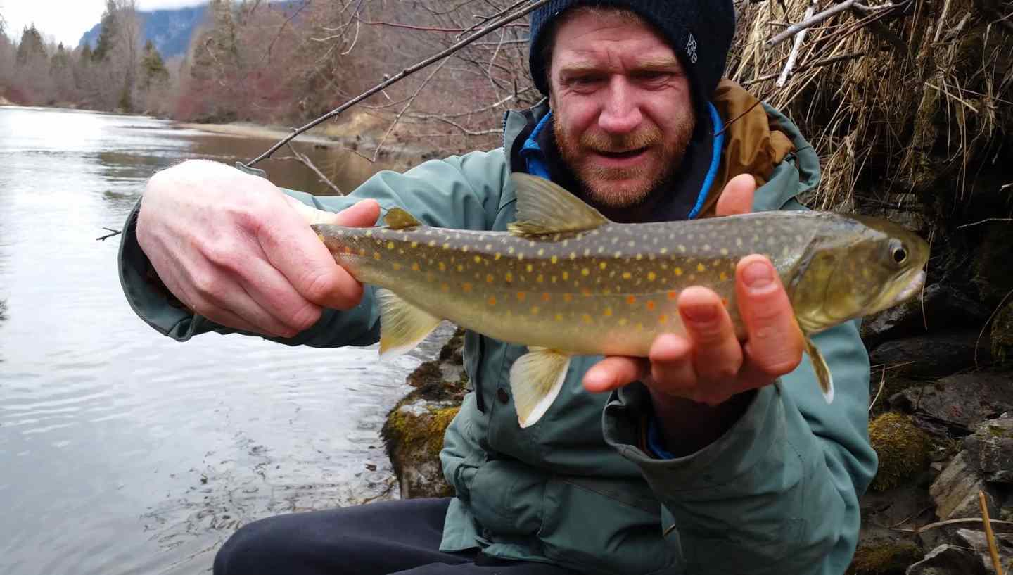Fishing reports pemberton whistler british columbia spring for Trouts fishing report