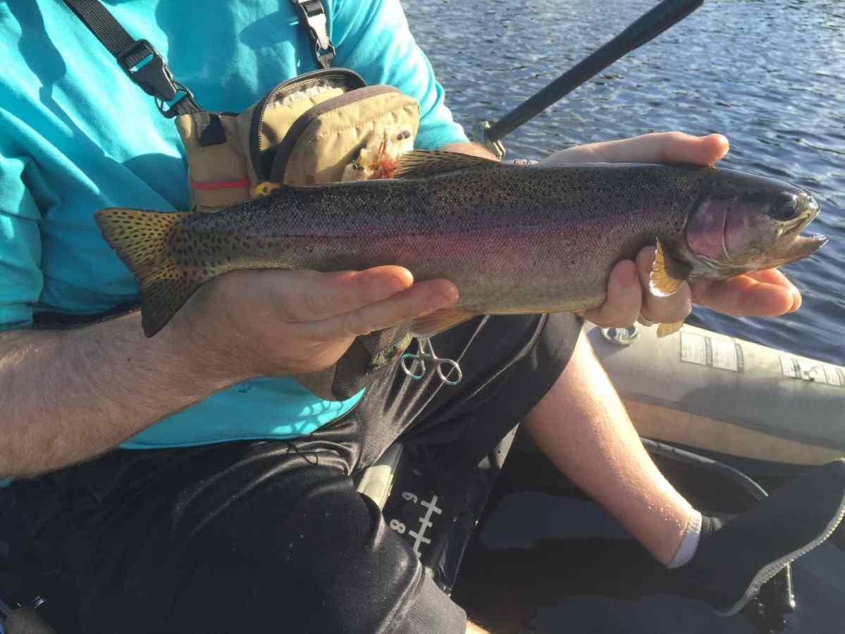 Remote bc fly fishing tips gwyneth lake for Trout fishing basics