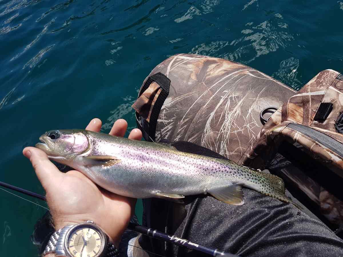 Its heli fishing season in british columbia canada for What fish are in season
