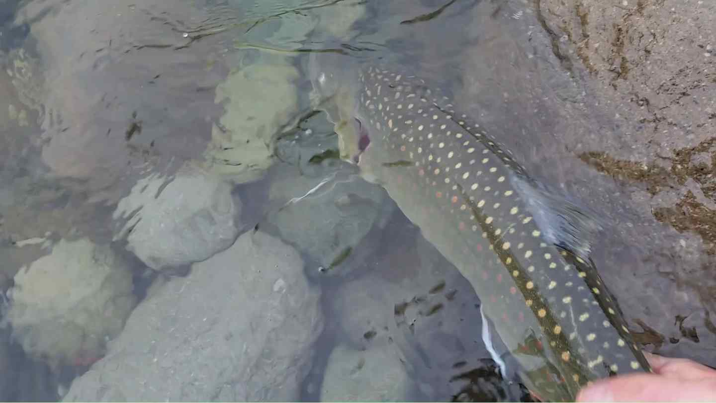 how to fly fish for trout in a river