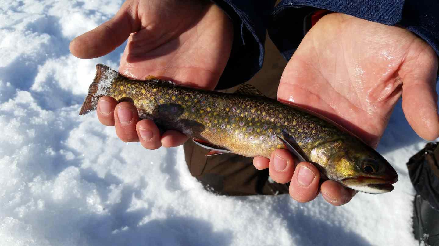 Lake lucille brook trout ice fishing in whistler bc for Ice fishing lake trout