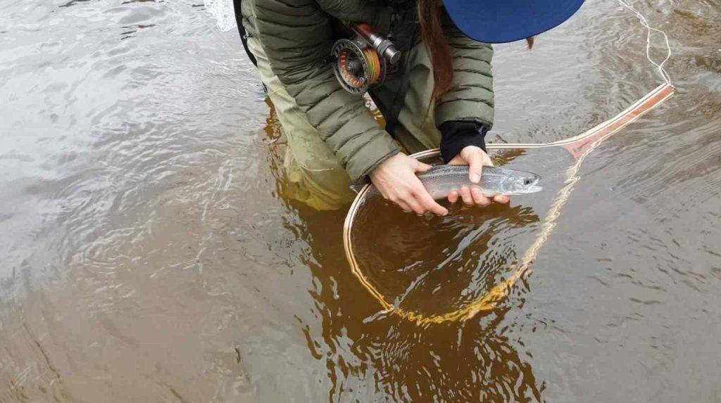 Coastal Cutthroat fly fishing in BC Canada