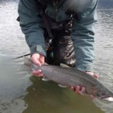 Fly fishing for Coastal Cutthroat Trout