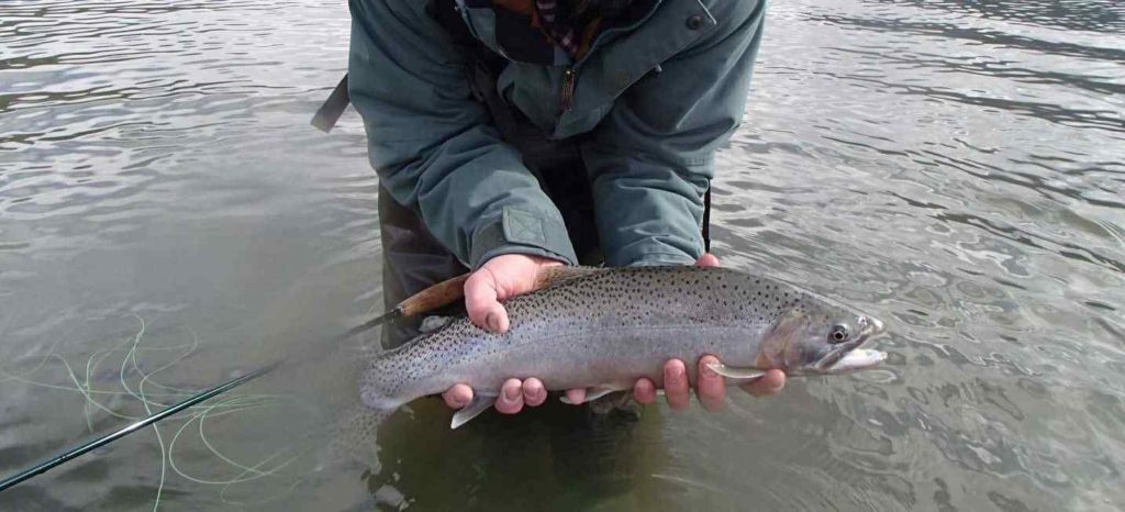 Fly fishing in Pemberton BC