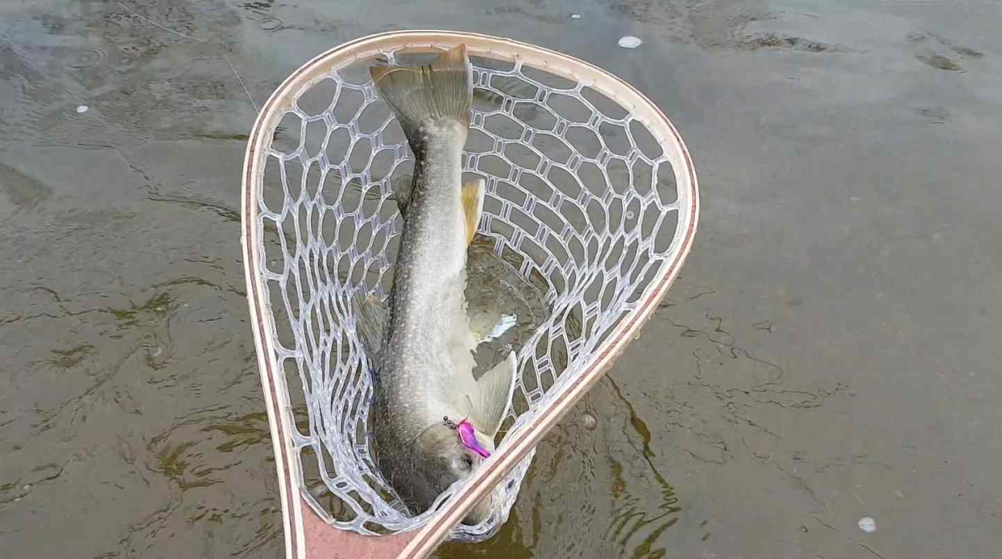 Fly fishing with streamers in whistler bc for Big fishing net