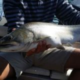 Big Bull Trout fishing trips in Canada