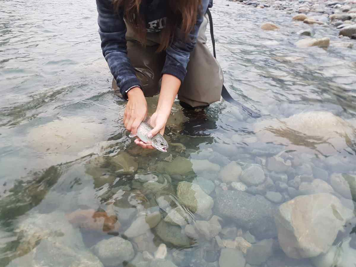 Great Fly Fishing In British Columbia Canada Birkenhead River