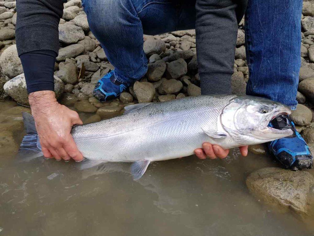 BC freshwater Salmon Fishing