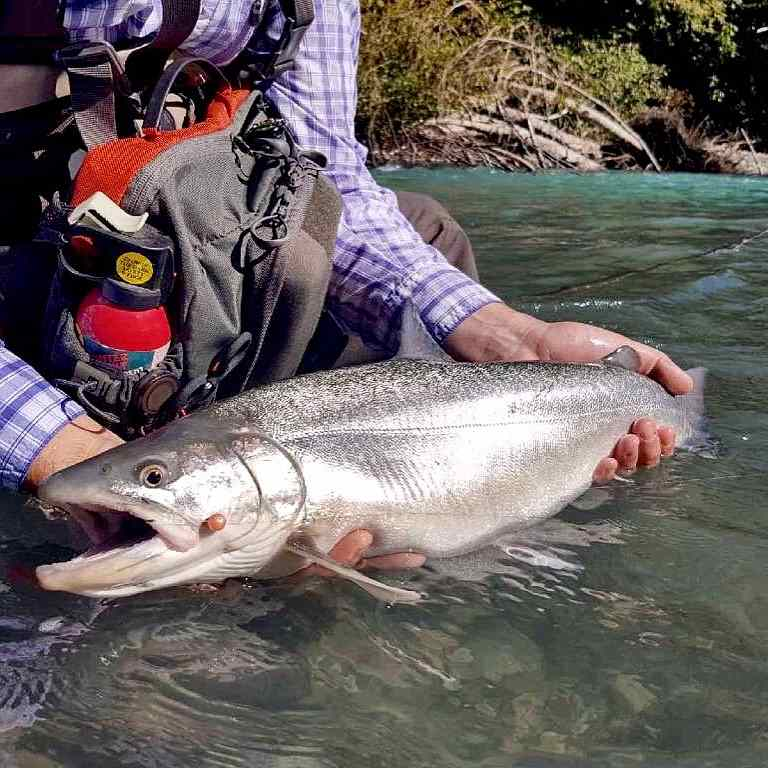 Bull Trout fly fishing in Squamish BC