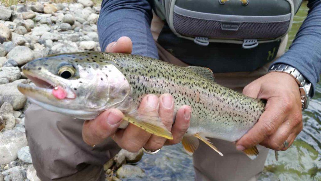 Fly fishing in Pemberton BC Canada