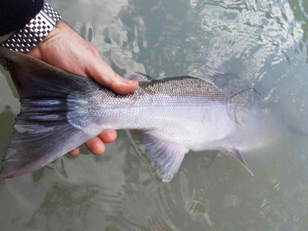 River fly fishing near Whistler British Columbia Canada