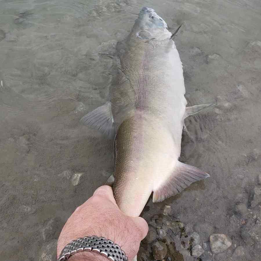 Best Freshwater Sockeye Salmon Fishing