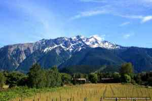Pemberton-Vineyard