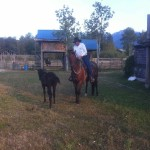 Trail Rides in Pemberton BC