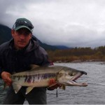 Chum Salmon Fly Fishing trips in British Columbia